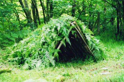 Создание укрытия в лесу