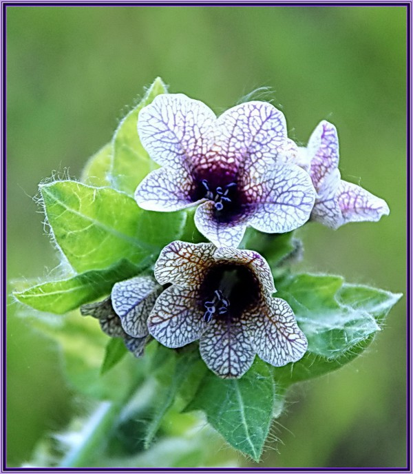 Ядовитые растения фото и названия