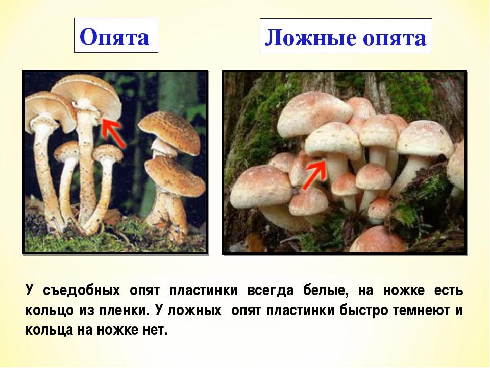 Ядовитые грибы фото и название
